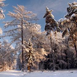 Sneeuw winter 2010