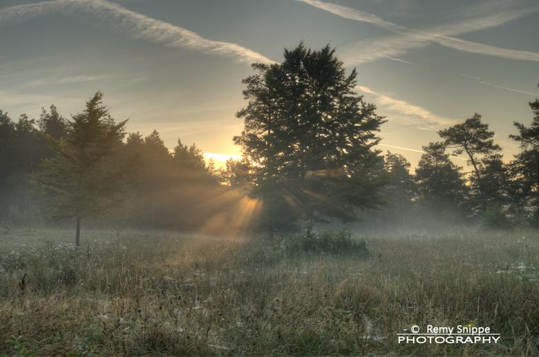 Early Morning - Foto van opkomende zon in een natuurgebied in de Duitse Eifel. Spinnenwebben onder de dauw, en zonnestralen die door de bomen piepen