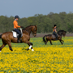 paard-en-bloemen