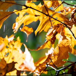 Autumn 01