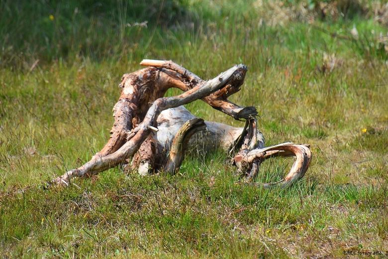 DSC_2715   Oud hout. - Teruggeven aan de natuur.<br /> <br /> <br /> Delleburgse heide.