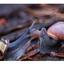 Drieluik slakken 2