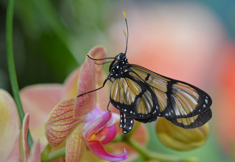 Mooie vlinder.