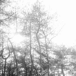 Natuur in rust