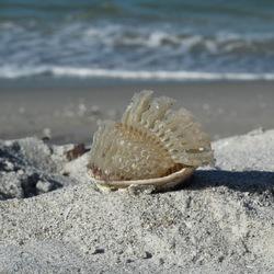 Iets uit de zee