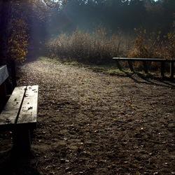 ochtend wandeling in bos