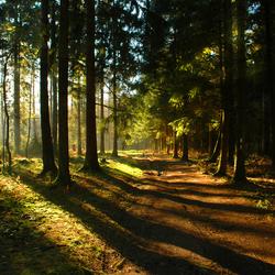 Bos van licht