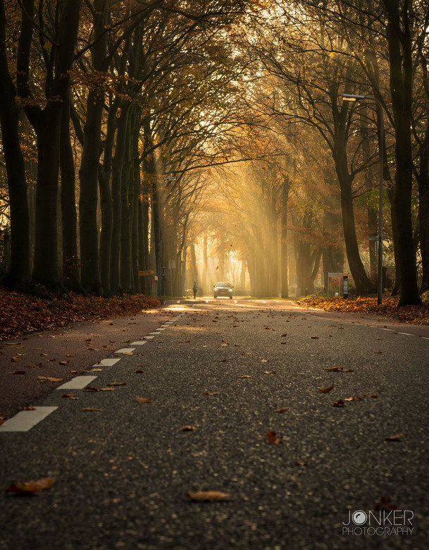 Autumn - Proberen om de laatste herfstkleuren vast te leggen....