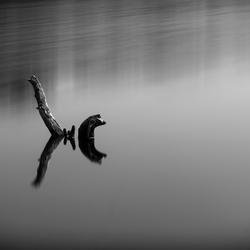 stilleven in het water