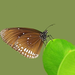 Butterfly on top