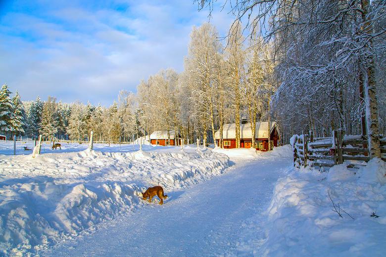 Lapland 3 Joop Lankhaar - Lapland (Finland)
