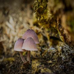 Hé paddenstoelen