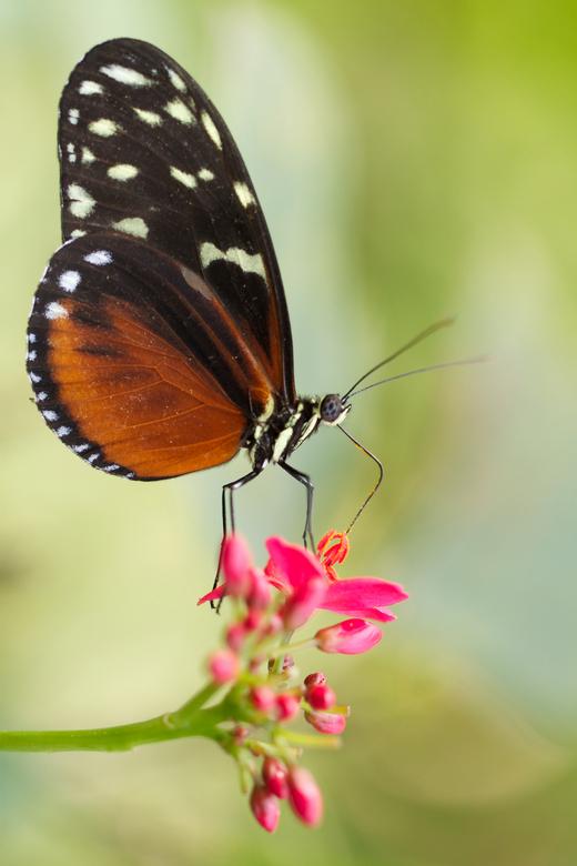 Vlindertuin - Blijdorp Rdam