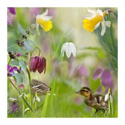 Voorjaar in de heemtuin
