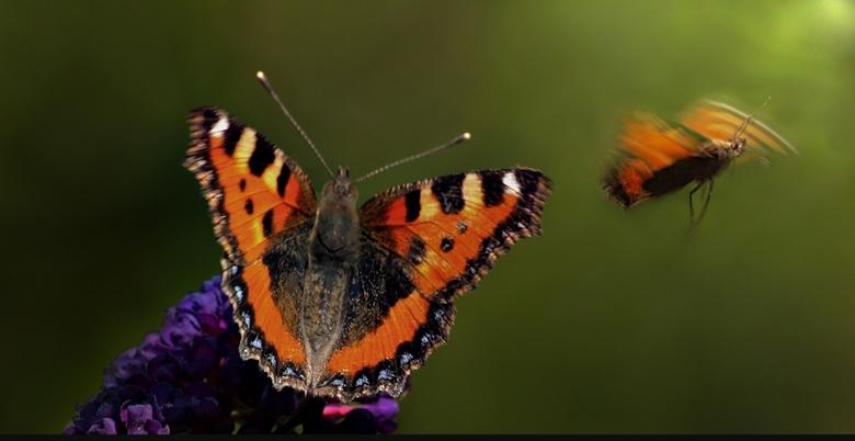 """Lieve Jenny - Lieve Jenny je hield zo van Vlinders en bloemen <img  src=""""/images/smileys/love.png""""/>   ....Ga je missen ....Knuf van mij ........Sterk"""