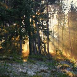 Warm golden rays