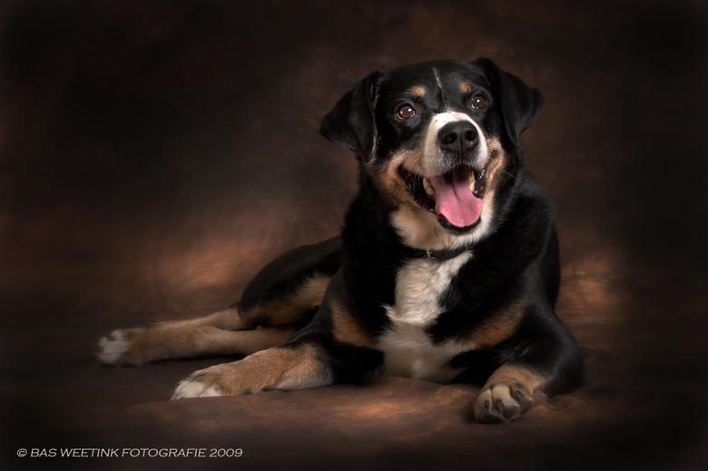 Bens - Vandaag voor het eerst een hond in de studio.<br /> Gelukkig is Bens een lieve en rustige hond.<br />