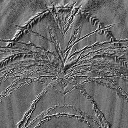 plant in het zand bewerking