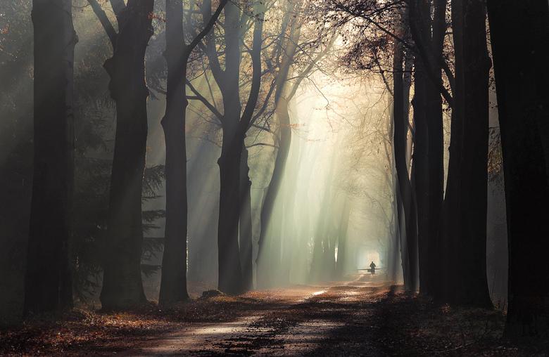 Ride into the light - Een fietser komt in de verte aanrijden over een mooie weg door landgoed Gorp en Roovert.