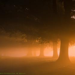 Opkomende zon in mist