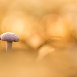 In het gouden licht