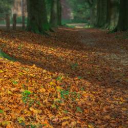 Herfst -landgoed Mariendaal