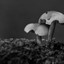 3 kleine paddenstoeltjes
