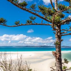 White Haven austalie
