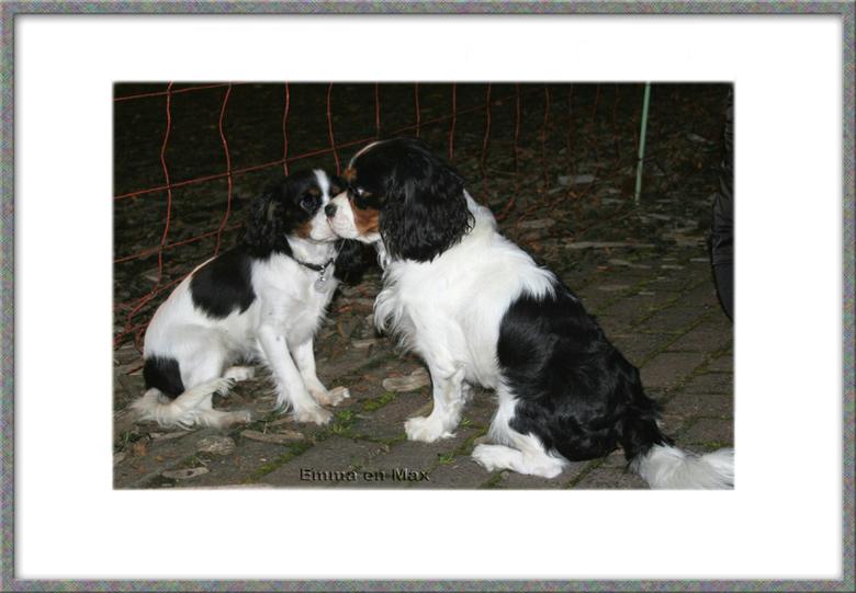 True love - Onze king charles cavalier Emma (rechts) is duideljk onder de indruk van de grote Max.<br /> De eerste soortgenoot die ze live tegenkwam.