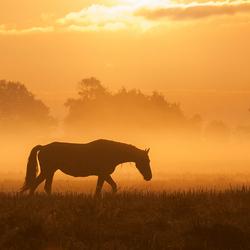 morning silence.jpg
