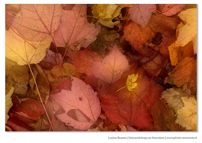 The forest floor - Herfst begint nu toch echt wel, wat een heerlijk seizoen is het...laat de blaadjes maar vallen! Bij deze foto heb ik gebruik gemaak