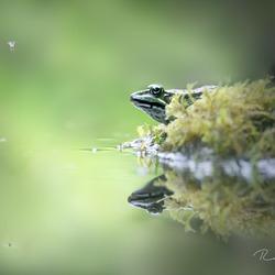 Kikker en mug bij het water