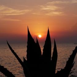 Cactus vs zonsondergang