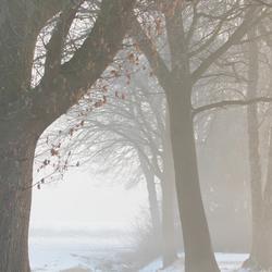 Sprookjesbomen