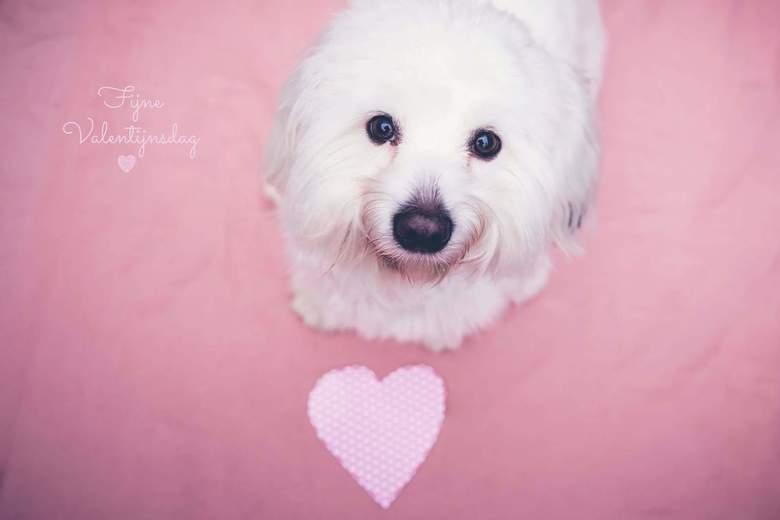 My Valentine -