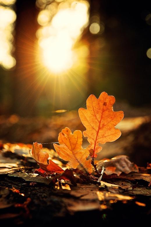 Herfst - Herfst gevoel