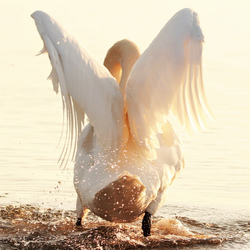 Gouden engelenvleugels