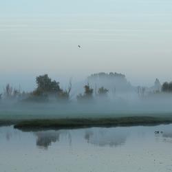 Bij mist overdag, groot licht....