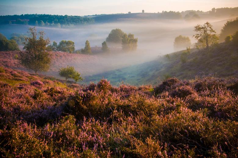 Foggy Posbank - Deze foto is genomen op de Posbank.<br /> De mist drijft tussen de heuvels door, terwijl de zon opkomt en de heide in bloei staat.<br