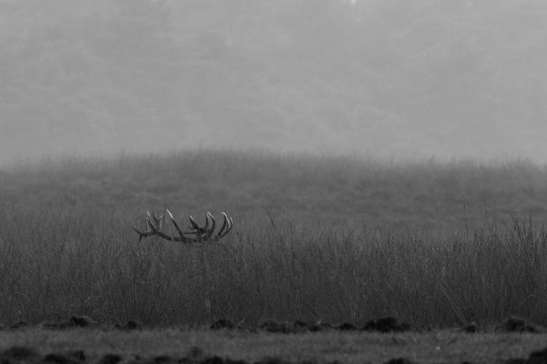 In de avondschemering tussen het gras.....