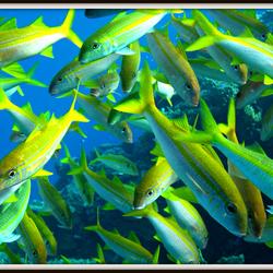 Tussen de vissen