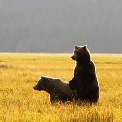 2 jonge beren kijken wat er aan de hand is
