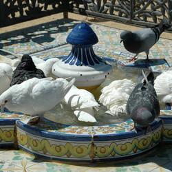 Duifjes in Sevilla