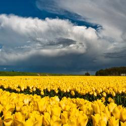Lente storm