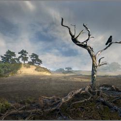 c-boers-2 landschap.jpg