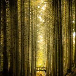Bilderbergse bossen Oosterbeek