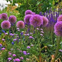 RHS Gardens (2)