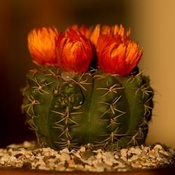 Mooie nep bloemen