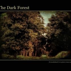 het donkere bos