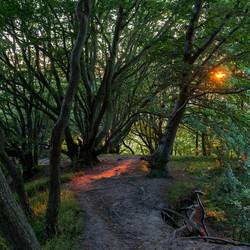 Het bos van Jernhatten